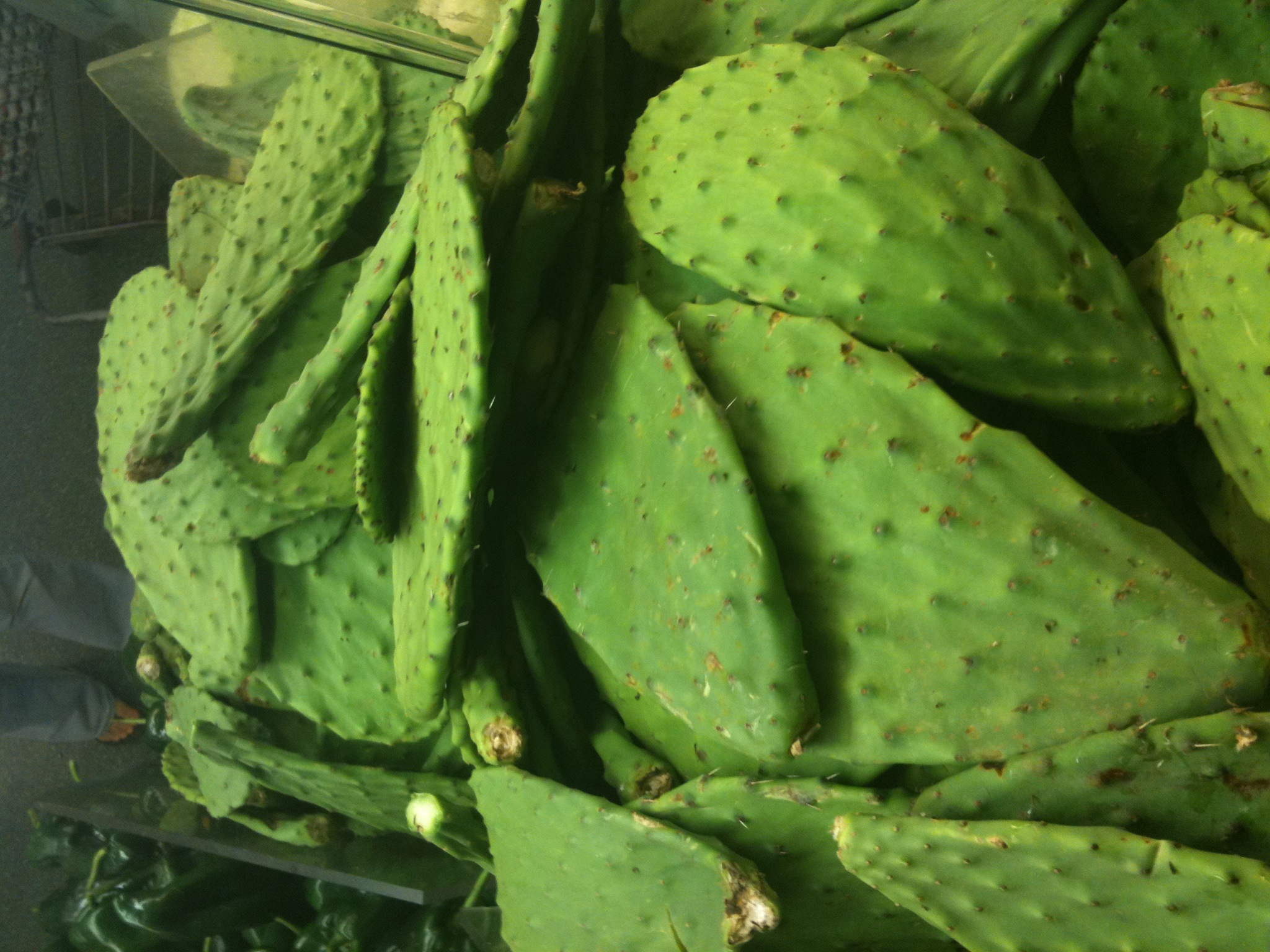 how to preserve nopales