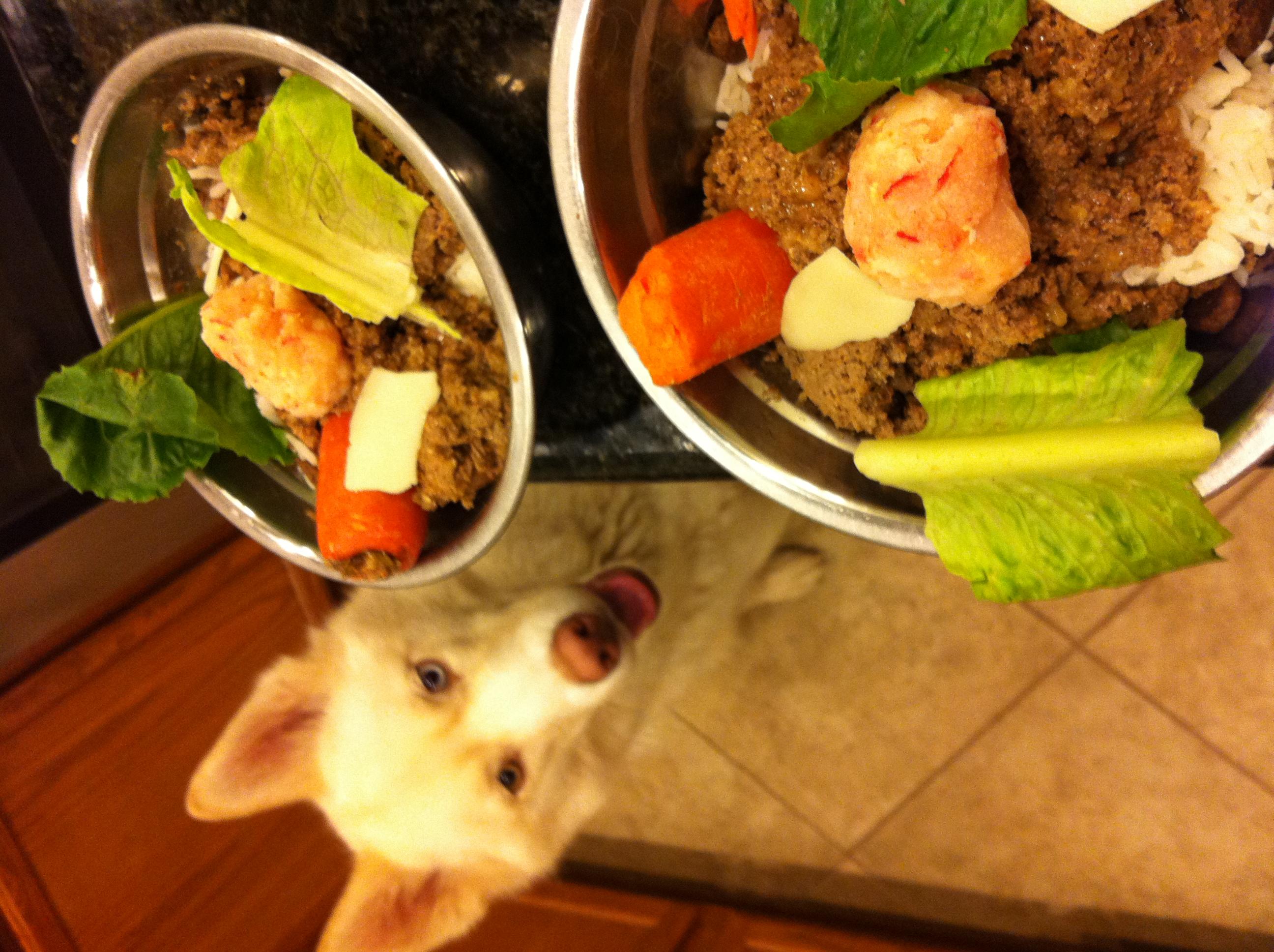 My Husky Won T Eat Dog Food