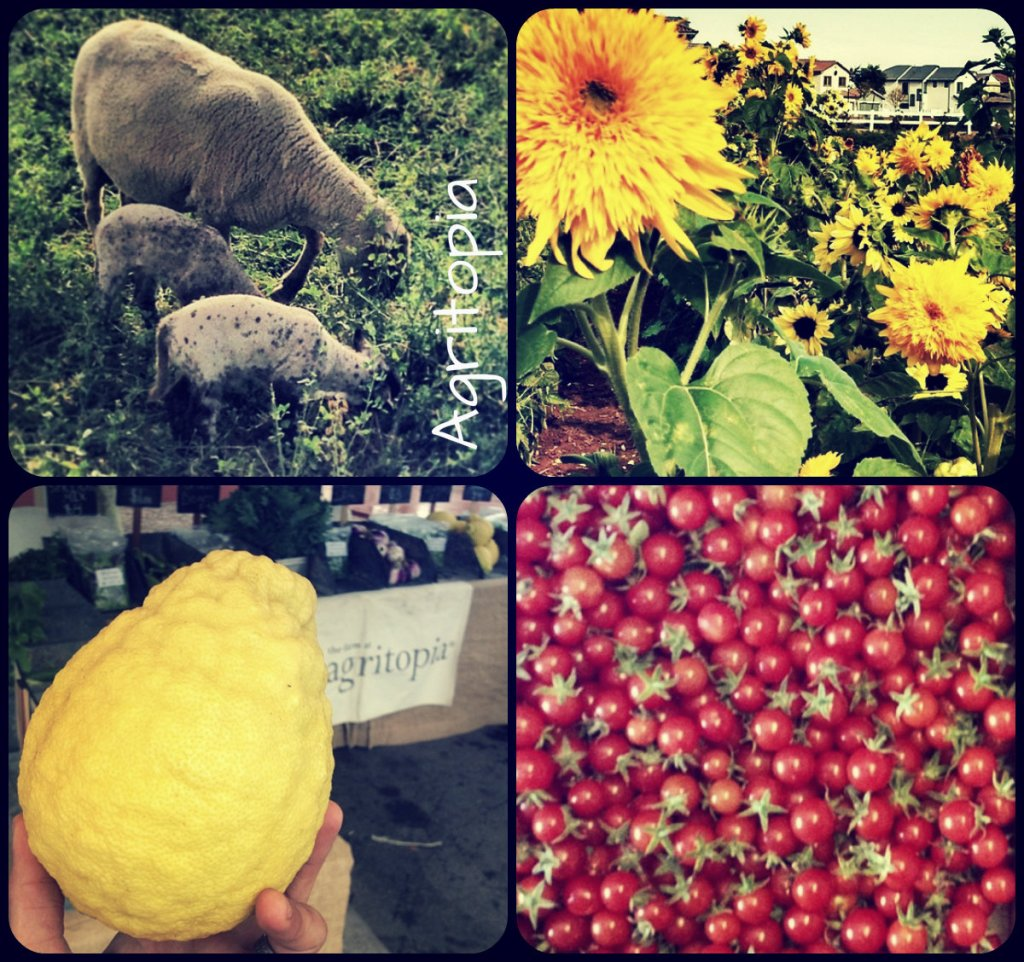 collage_agritopia