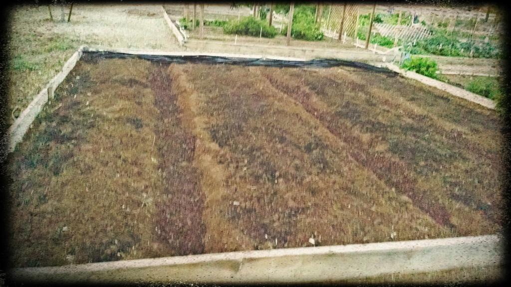 dirt_plot